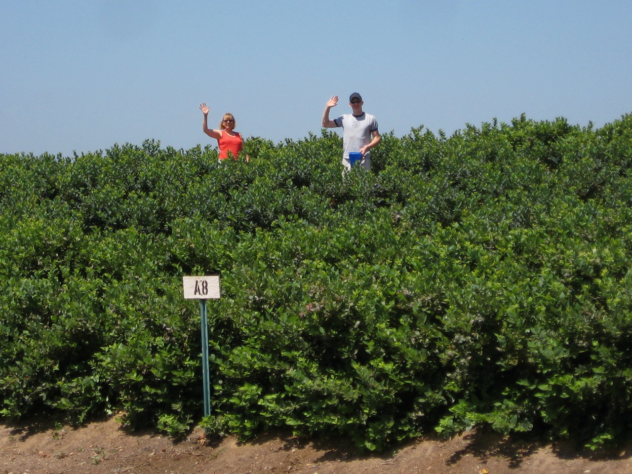 Lorraine and Matt in Blueberry Field