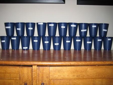 GCC HS Cups