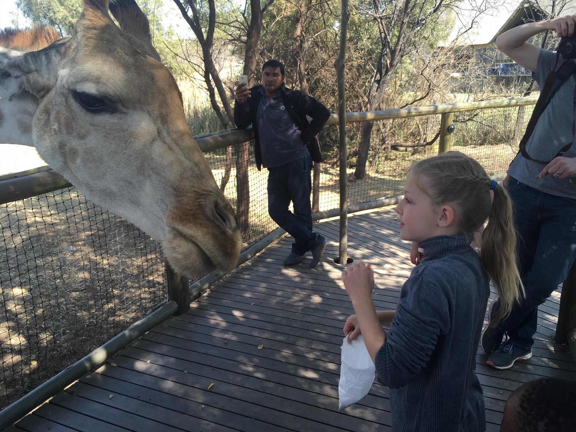 abi feeding giraffe
